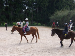 Horse riding group lessons Tauranga