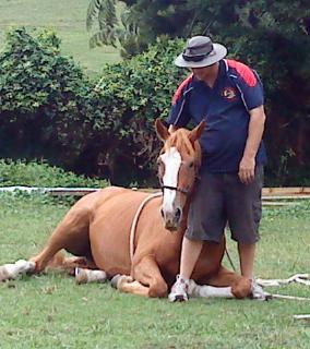 Trinity Valley lying horse down
