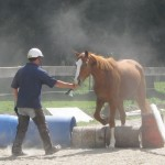Pete Townsend horse training small jump