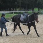 Trinity Valley Horse Training