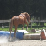 Trinity Valley Pete Townsend horse training