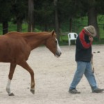 Trinity Valley Peter Townsend horse training