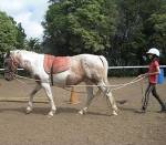 All aspects of horsemanship are taught.