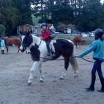 Horsemanship Trinity Valley Tauranga