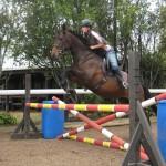 Show jumping holiday programme Tauranga