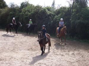 horse riding lessons Tauranga