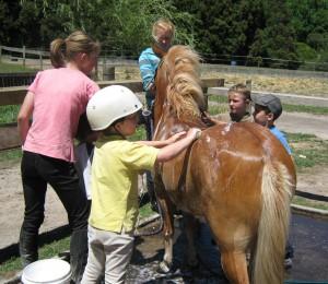 Washing a horse